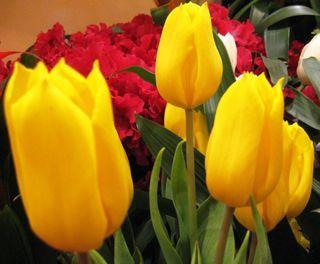 Macys Flower Show 6