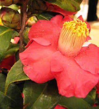 Macys Flower Show 4